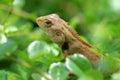 Dragon closeup in thailand Stock Photos
