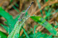 Dragon fly the gorgeous in the morning at the garden Royalty Free Stock Photo