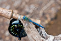Dragon fly sitting near fly fishing rod and a it Stock Photography