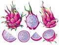 Set of pink dragon fruits Pitaya elements. Whole fruit, half and pieces.