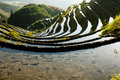 Dragon s backbone rice terraces • sunset at near yao village of dazhai guangxi province china Royalty Free Stock Image