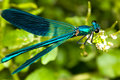 Stock Images Dragonfly