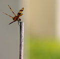 Dragonfly a on the bamboo stick Stock Photography