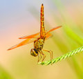 Dragonfly beautiful on a branch with nature background Stock Photos