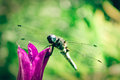 Dragonfly on bell close up the Royalty Free Stock Photo