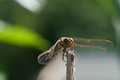 Dragonfly on a branch macro photography Stock Image