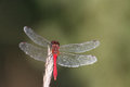 Dragonfly Closeup