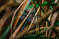 A dragonfly in detail shot of landed Stock Images