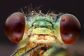 Dragonfly head extreme macro