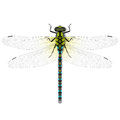 Dragonfly illustration on white background Stock Image