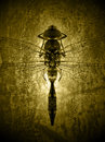 Dragonfly a isolated on grunge background Stock Photography