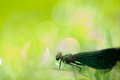 Dragonfly on leaf Royalty Free Stock Photo