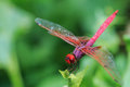 Dragonfly outdoor,beautiful dragonfly . Royalty Free Stock Photo