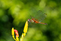 Dragonfly outdoor Royalty Free Stock Photo