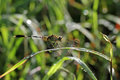 Dragonfly outdoor on wet morning Royalty Free Stock Photo
