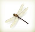 Dragonfly realistic computer illustration on white background Stock Image