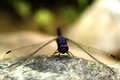 Dragonfly resting on a rock Stock Image