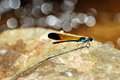 The dragonfly on the rock with bokeh Stock Photo