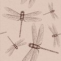 Dragonfly sketch Royalty Free Stock Photo