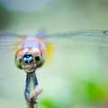 Dragonfly the with soft background Stock Photography