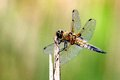 Dragonfly on a sunny afternoon Stock Photo