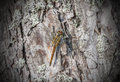 Dragonfly on tree park closeup of a a pine Royalty Free Stock Photography