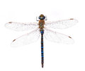 Dragonfly on a white background blue Royalty Free Stock Photos