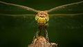 Dragonfly on a wooden stick Stock Images
