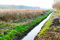 Drainage ditch in autumn scenery Royalty Free Stock Photo
