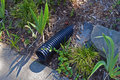 Drainage pipe in lawn Royalty Free Stock Photo