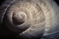 Dramatic close up of spiral shell, Royalty Free Stock Photo