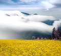 Dramatic clouds and Rape field Royalty Free Stock Photo
