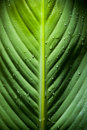 Dramatic Leaf Detail Stock Images