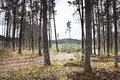 Dramatic photo with a detail of a pine forest in the spring when cloudy skies in Macha's Land in Czech republic Royalty Free Stock Photo