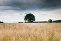 Dramatic sky over field with solitary tree Royalty Free Stock Photo