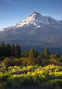 Dramatic sunrise light hits mount shasta cascade range californi vertical composition over sage brush mt california Stock Image