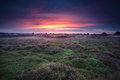 Dramatic sunrise over heather land drents friese wold netherlands Royalty Free Stock Photo