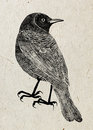Drawing of bird trupial, black silhouette on beige rice paper background.