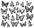 Drawing butterflies. Stencil butterfly, moth wings and flying insects isolated vector illustration set Royalty Free Stock Photo