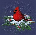 Drawing of Cardinal in Snow Stock Photography