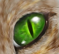 Drawing of a cat eye