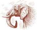 Drawing of Elephant. Stock Photography