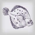 Drawing of a flounder in the sea Royalty Free Stock Image
