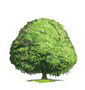 Drawing of Green Tree Royalty Free Stock Photos