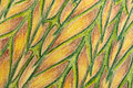 Drawing of leaf detail Royalty Free Stock Photography
