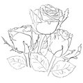 Drawing with roses on a white background Stock Photography