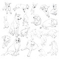 Drawing set of dogs on many pose Royalty Free Stock Photography