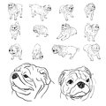 Drawing set of pug Stock Photo