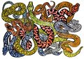 Drawing a sketch of many different colorful snakes dangerous and