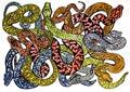 Kreslení skica z mnoho odlišný barvitý hadi nebezpečný